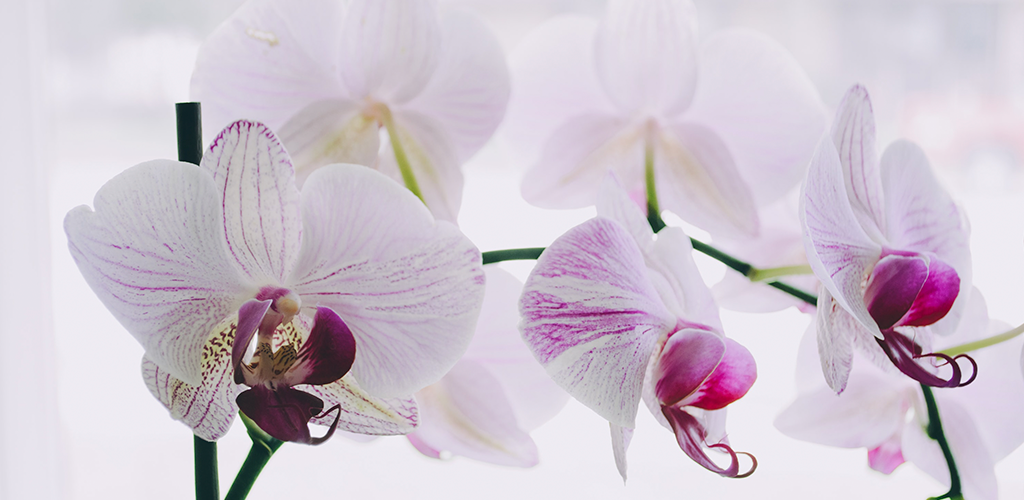 The Most Beautiful Flowers To Inspire Aire Magazine